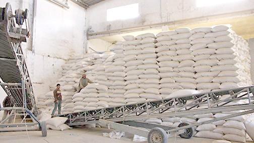 توزيع 2,5 مليون قنطار من الشعير المدعم لمربي الماشية في المناطق المتضررة من قلة التساقطات المطرية